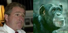 Bush or Chimp?